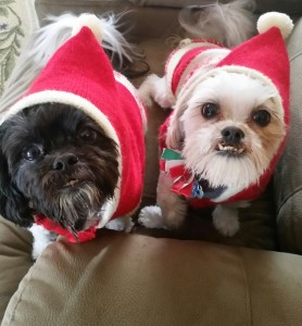Dogs Holiday 2014